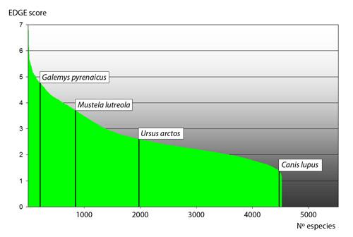 Galemys pyrenaicus desman iberico Pirineos Pyrenees program edge existence 500