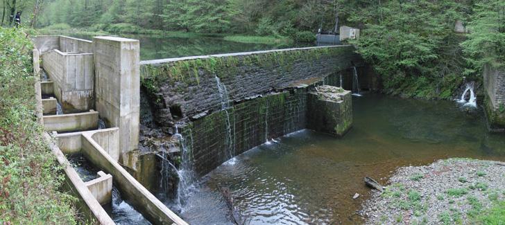 Galemys pyrenaicus desman Pirineos iberico Pyrenees presa central hidroelectrica