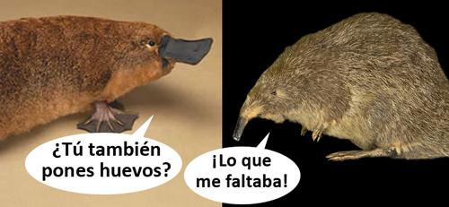 Hueveros