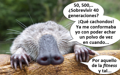 Galemys 50 500 rules